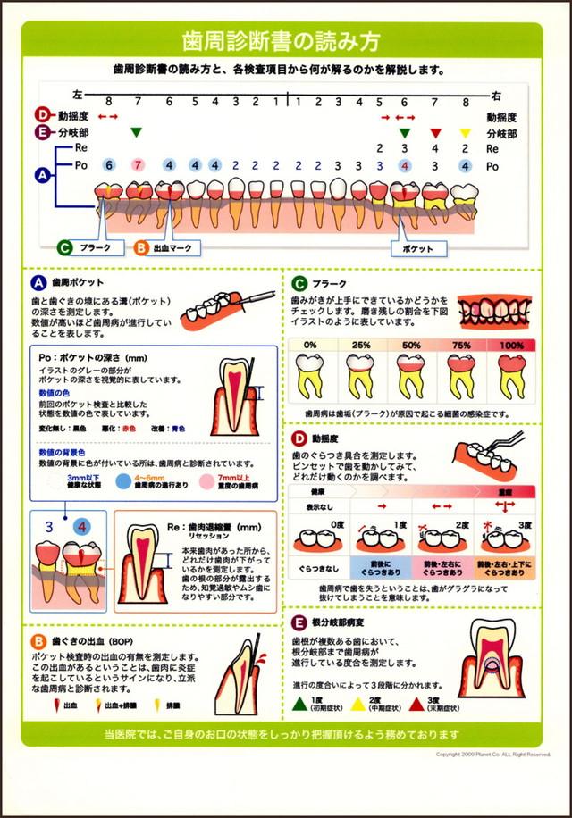 歯周診断書の読み方