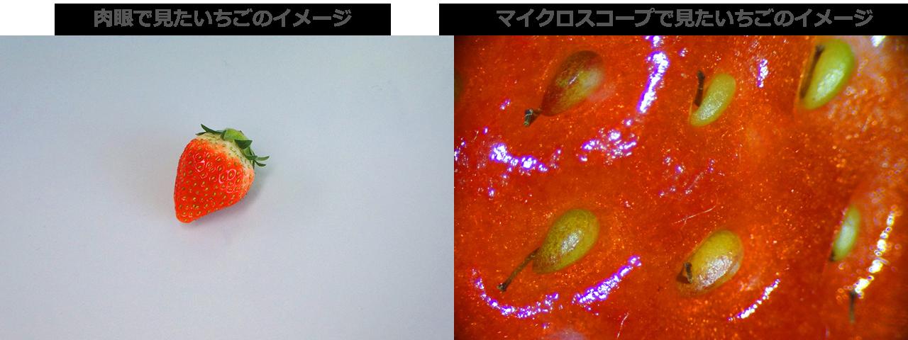 マイクロスコープと肉眼での見え方比較